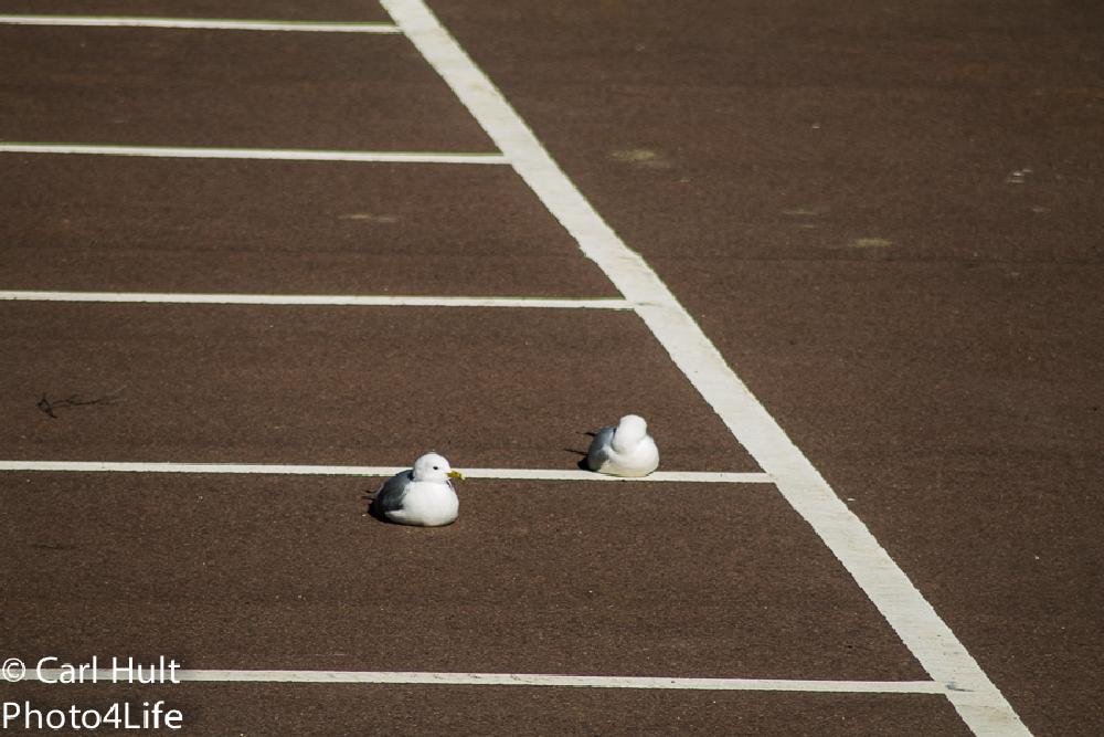 Photo in Animal #sleep #gull #bird