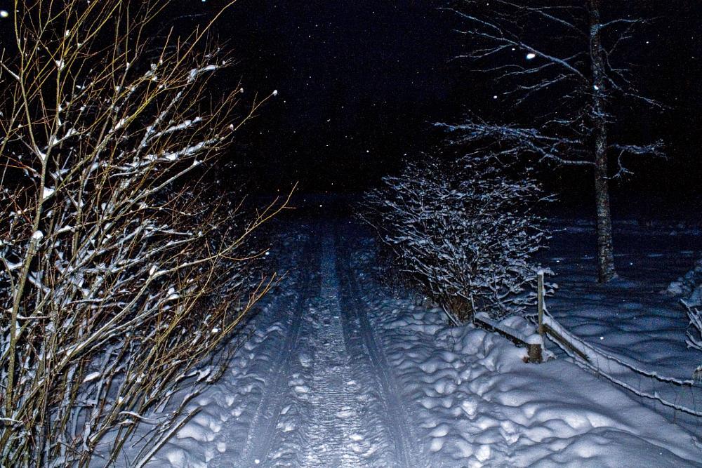 Photo in Nature #bush #winter #snow #evening