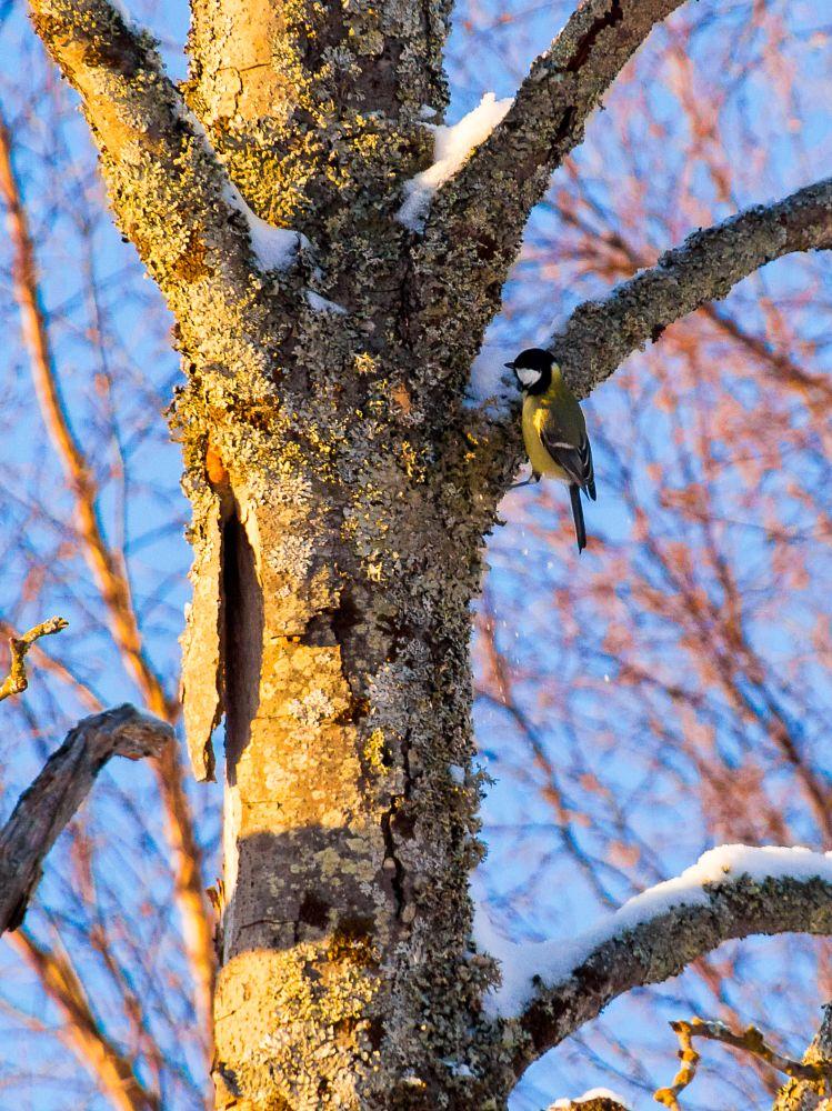 Photo in Animal #bird #winter #tree