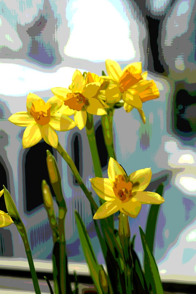 Photo in Abstract #daffodil #flower #splant #garden #nature