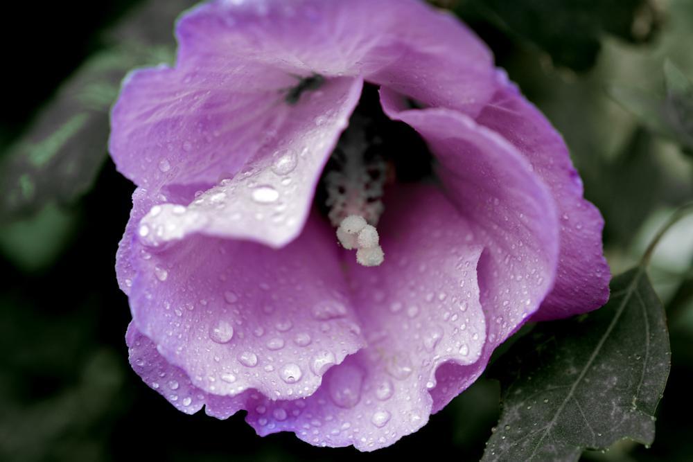 Photo in Nature #flowers #planta #gardens #nature
