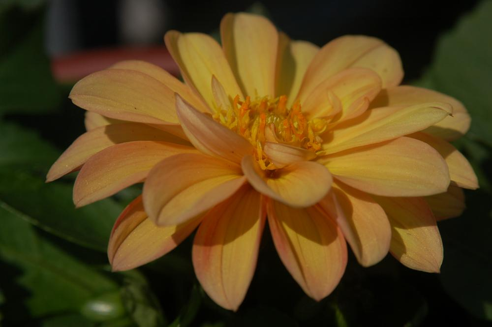 Photo in Nature #flower #plants #gardens #nature
