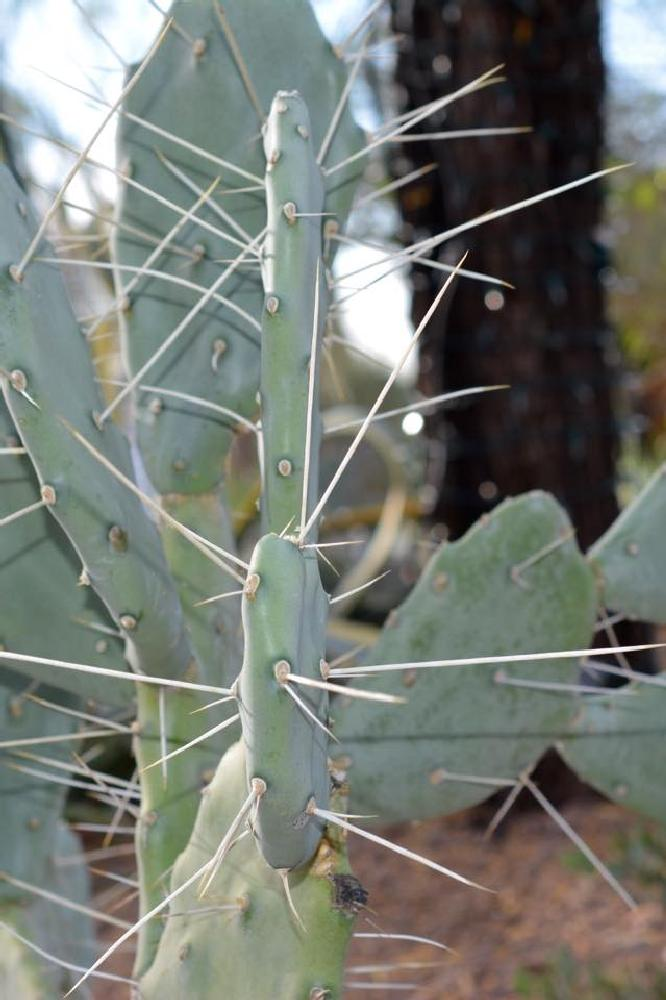 Photo in Nature #cactus #thorns #desert