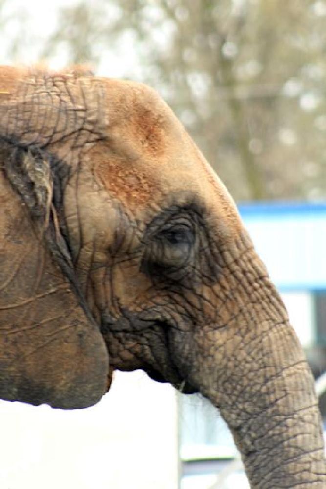 Photo in Random #elephants #animals #circus