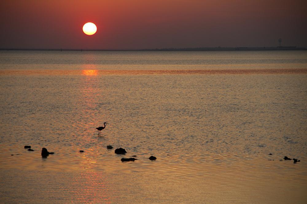 Photo in Landscape #landscape #bestof2014 #canon #bird #sunset