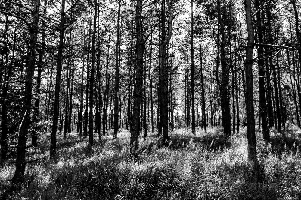 Photo in Black and White #czech republic #lothar heller #baum #blackandwhite #blanconegro #day #forest #natur #nature #outdoor #schwarzweiss #tag #tree #tschechien #wald #česká republika