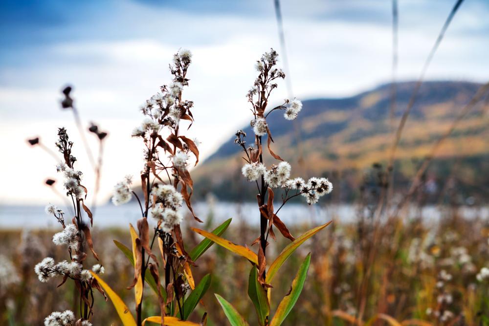 Photo in Landscape #landscape #autumn #fall #quebec #stéphane david #nature