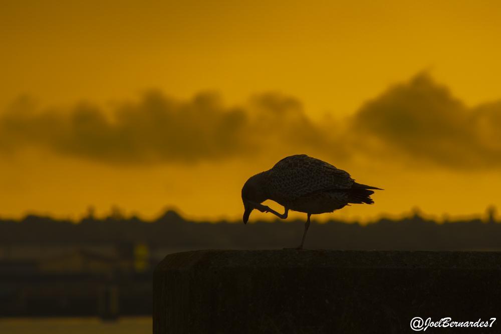 Photo in Nature #vibrante sky #joel bernardes #liverpool uk #birds #nature #silhouette