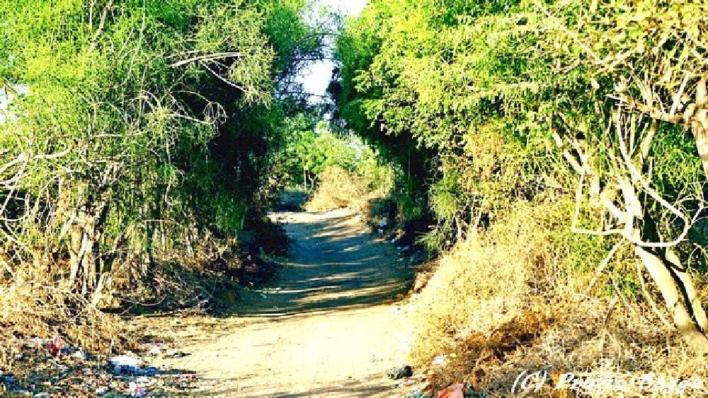 Photo in Nature #tree tunnel #village