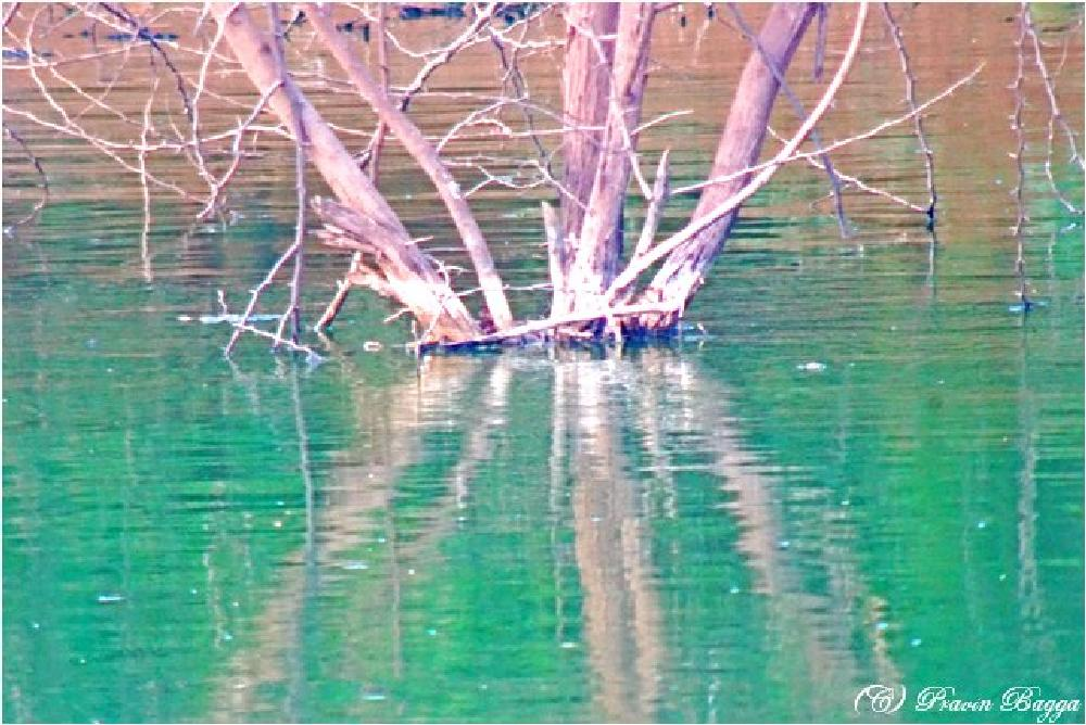 Photo in Nature #cyrillic