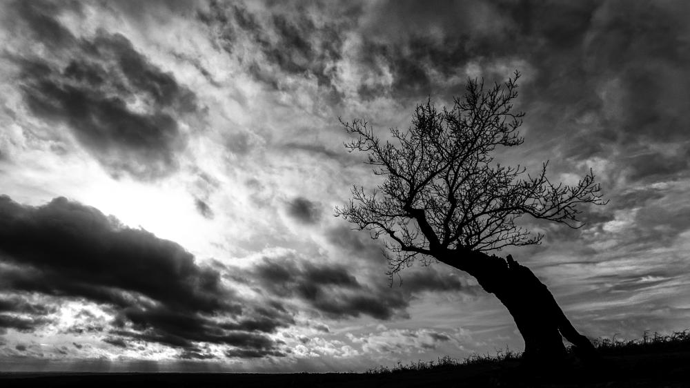 Photo in Landscape #landscape #tree #sky #clouds #black and white