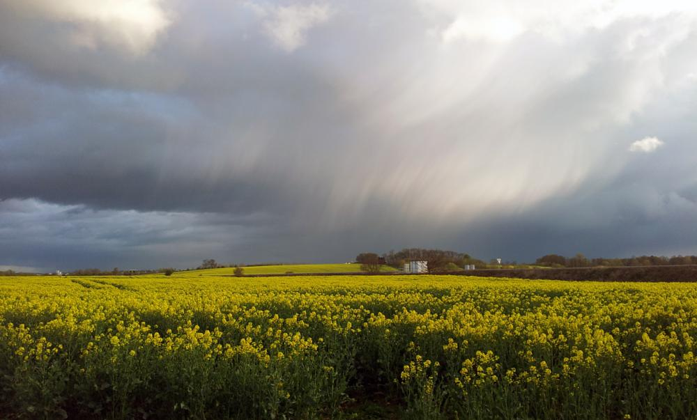 Photo in Landscape #rain #field #landscape #storm #crops #view