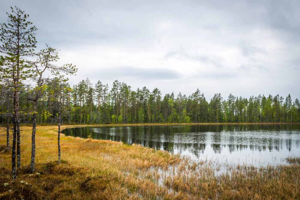 Photo in Nature #tarn #small lake #fishing #jämtland