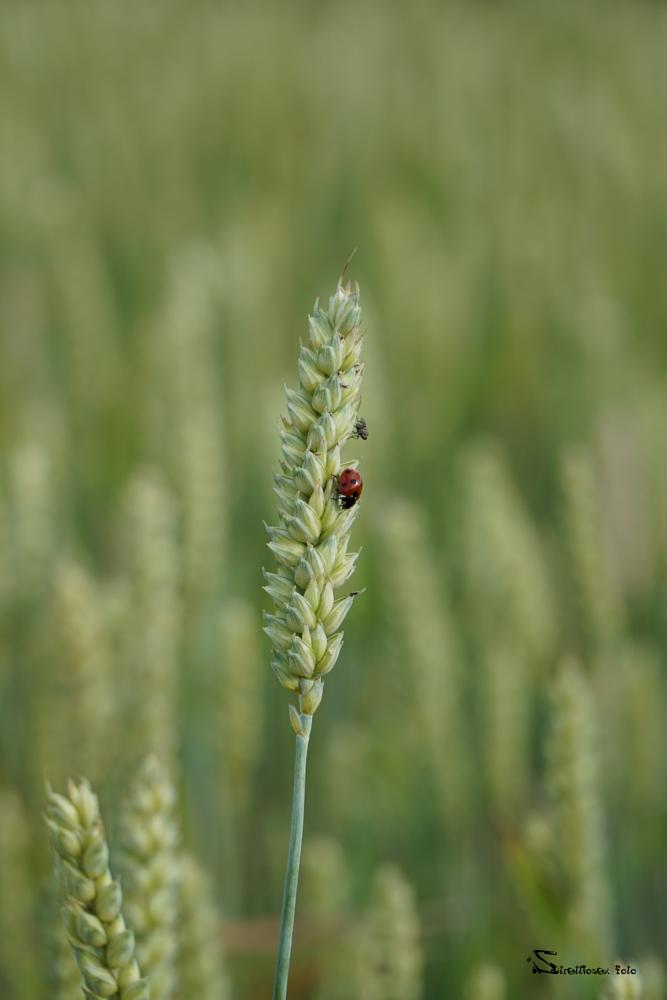 Photo in Animal #wild_small_animals #nofilter #greenwheat