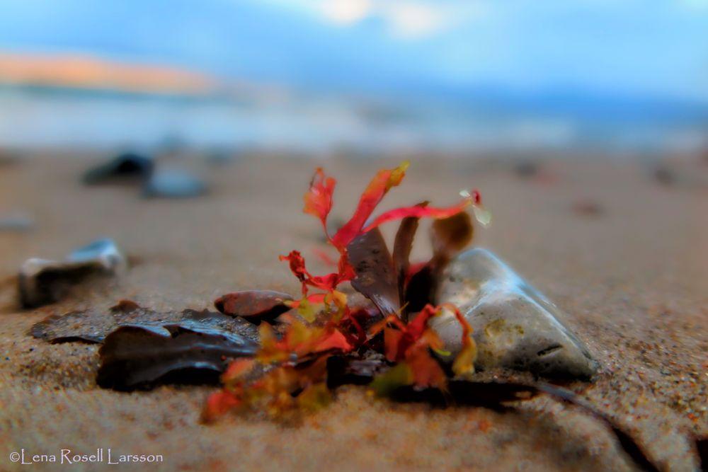 Photo in Nature #colorful #seaweed #beach #windy beach #winter