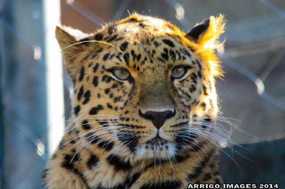 Photo in Animal #zoo #animal #cat