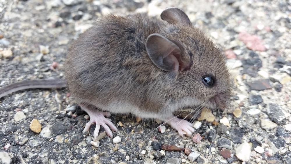 Photo in Animal #mouse