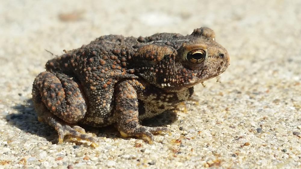 Photo in Animal #toad