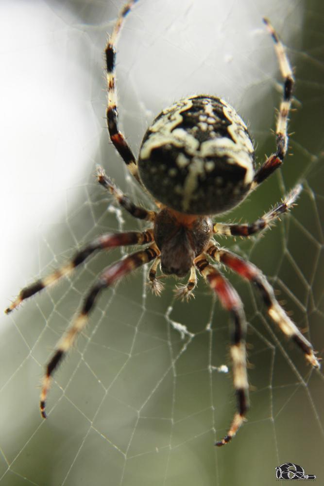 Photo in Animal #spider