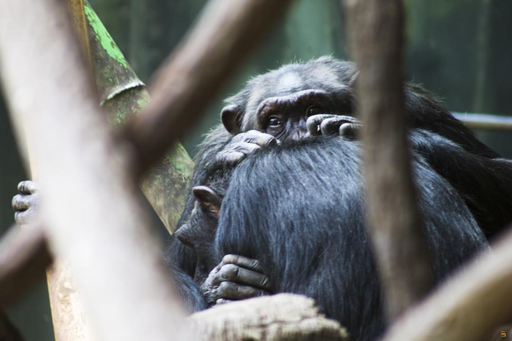 Photo in Animal #monkey