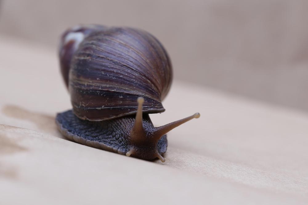 Photo in Random #snail #best images #animal