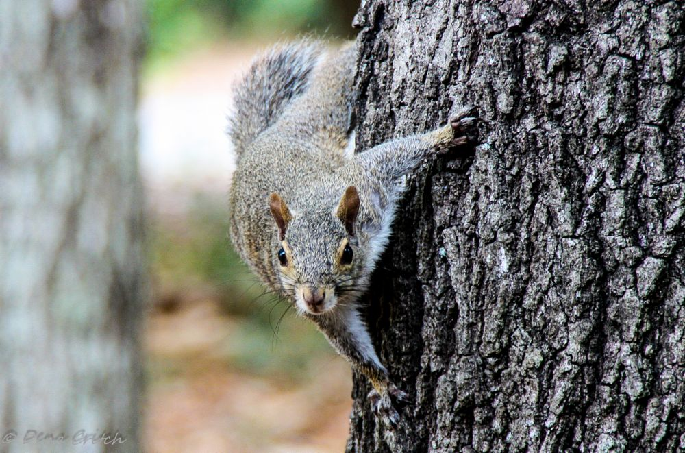 Photo in Macro #nature #wildlife #macro #squirrel #outside #tree