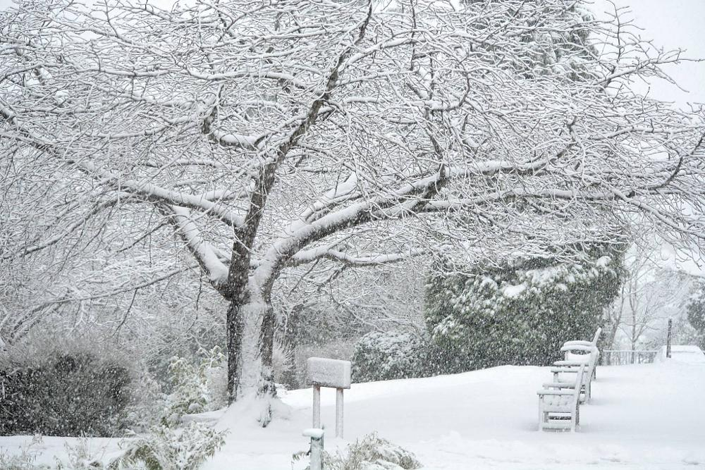 Photo in Landscape #snow #trees #weather