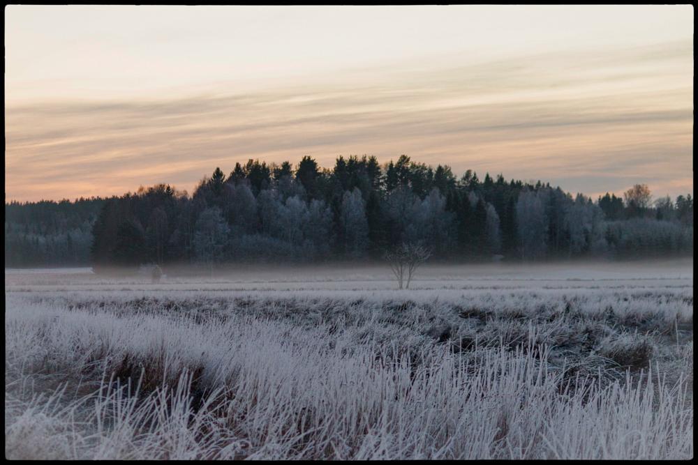 Photo in Nature #tveta #sweden #viklund