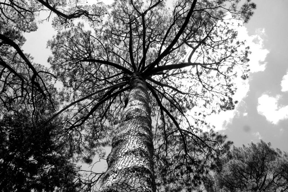 Photo in Nature #australian #astralia #trees #art #photography #photograher #google+ #love
