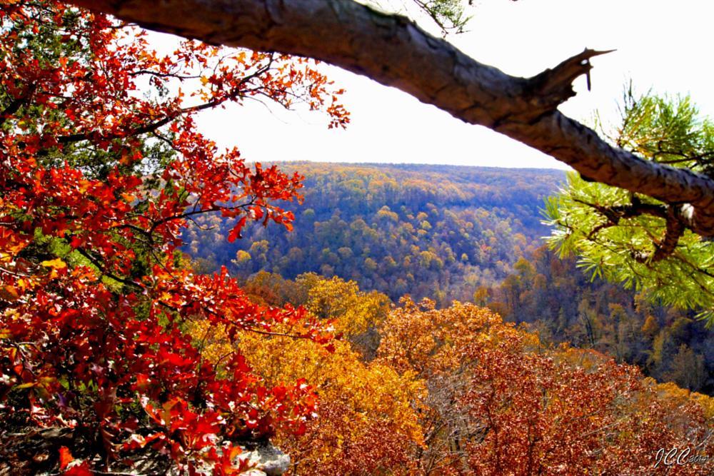 Photo in Landscape #autumn #foliage #mountains #buffalo river wilderness