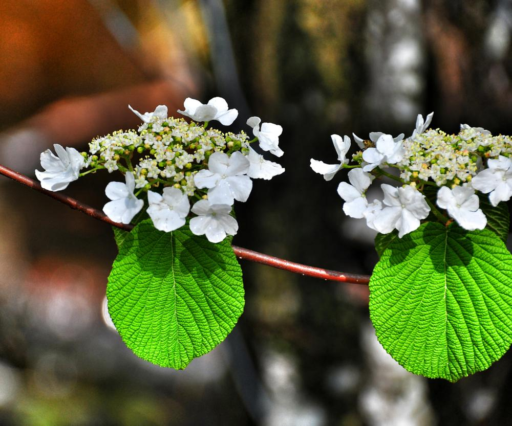 Photo in Nature #flowers trees close up nikon