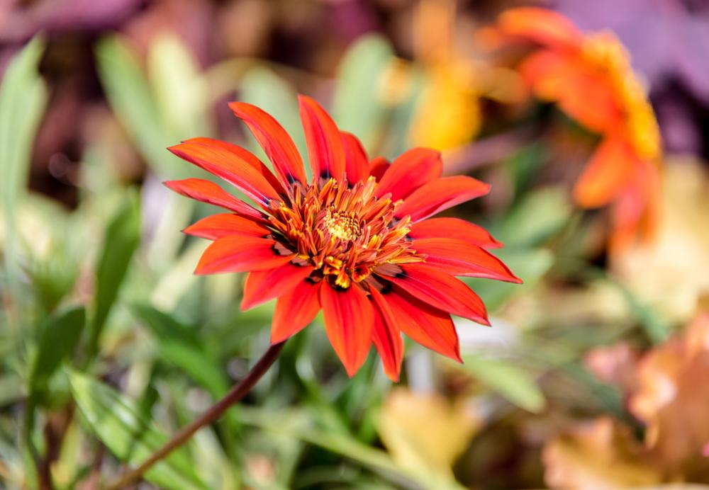 Photo in Macro #flower #christchurch #new zealand