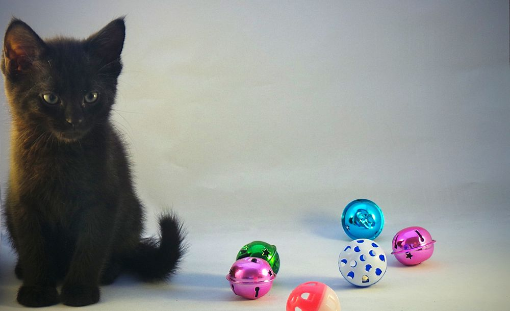 Photo in Random #cats #kittens