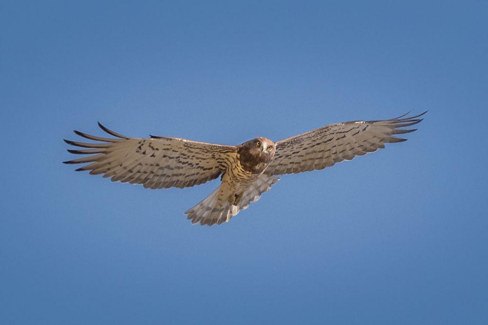 Photo in Animal #predator #bird