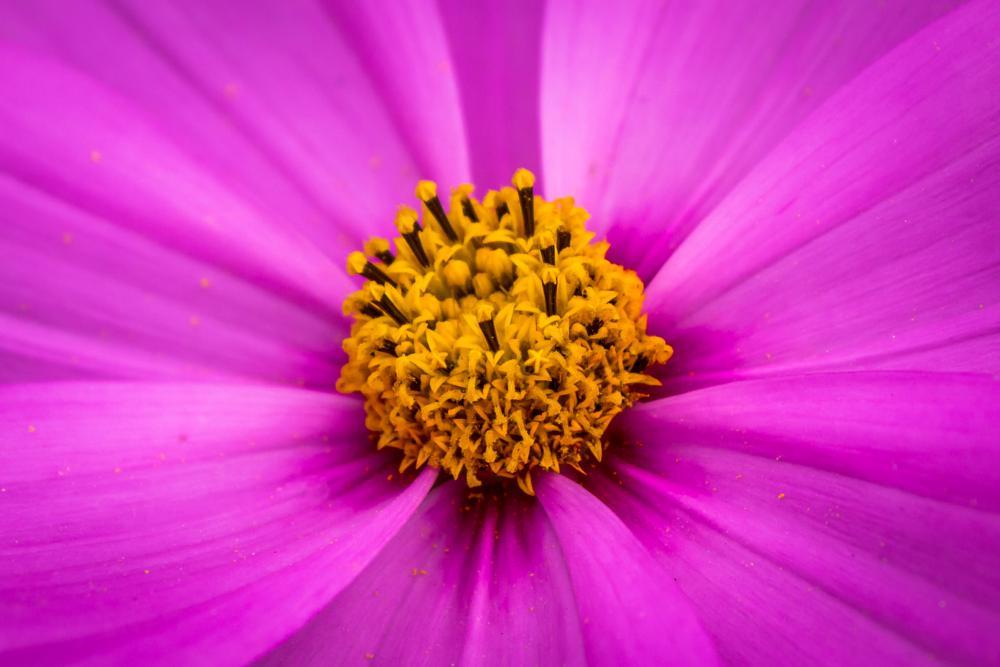 Photo in Nature #flower #fushia