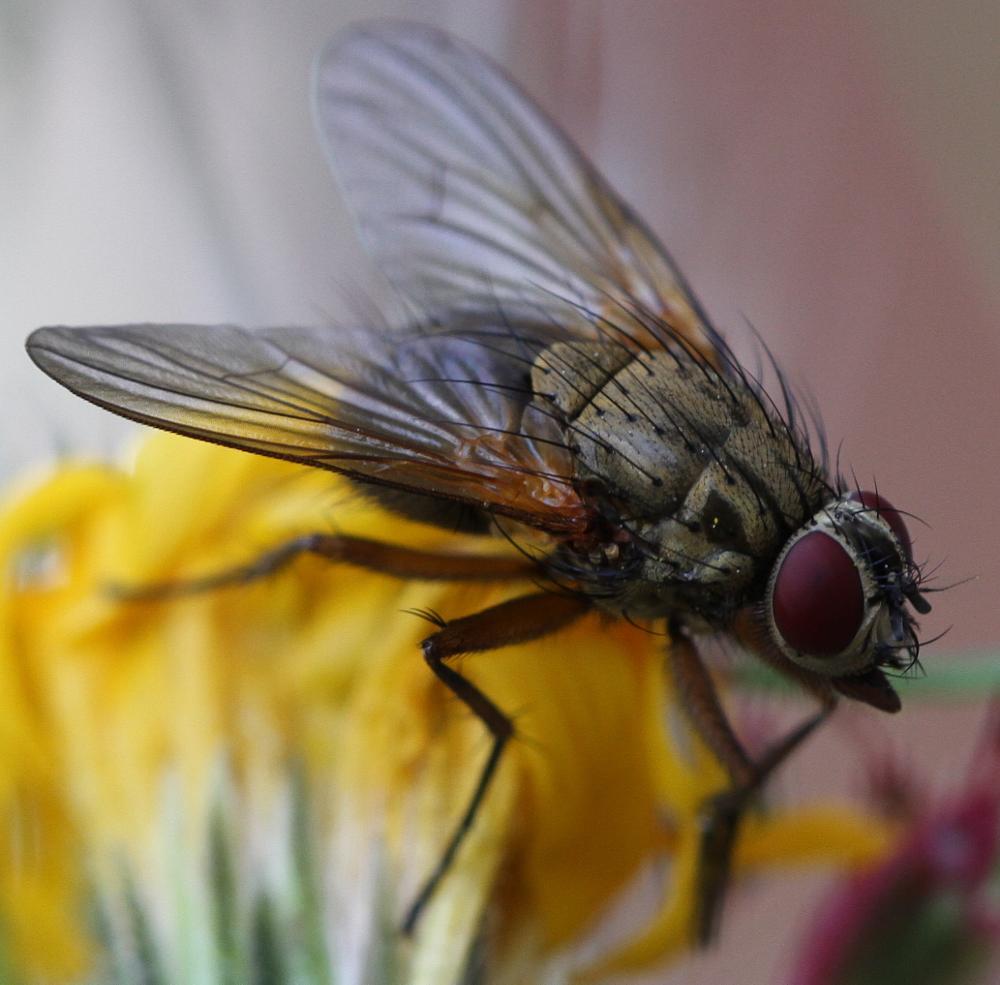 Photo in Macro #fly