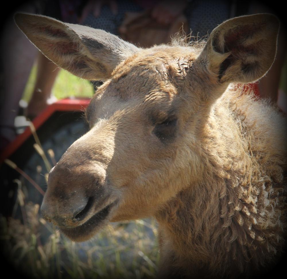 Photo in Animal #elk #moos