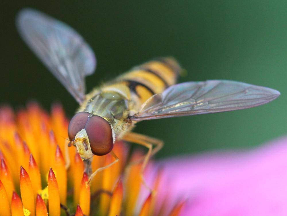 Photo in Macro #fly #flower