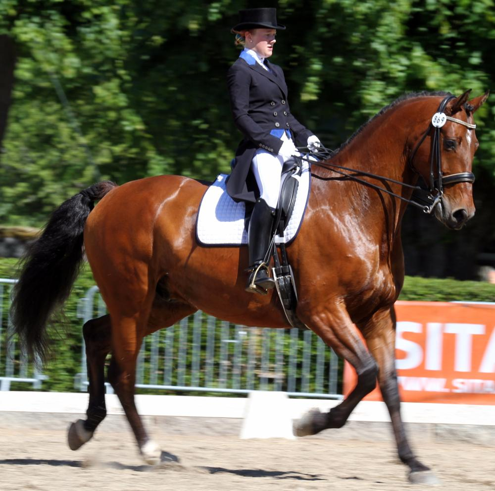Photo in Sports #dressage horse
