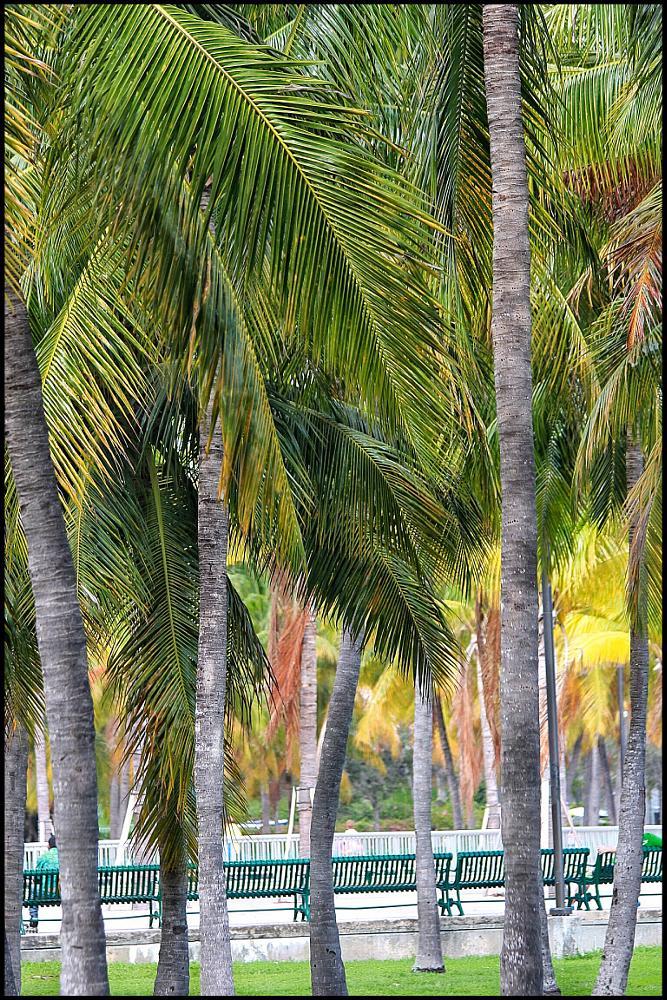 Photo in Random #palm trees #florida #miami #buildings #ocean