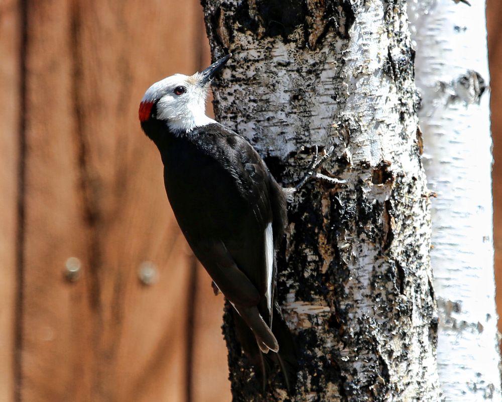 Photo in Random #bird #woodpecker