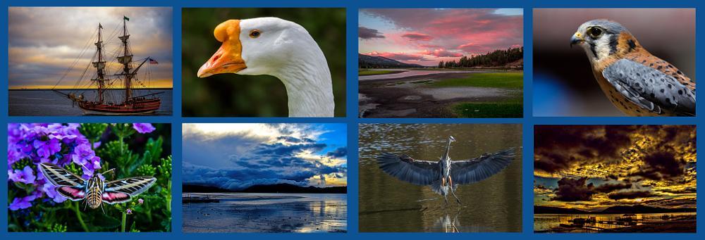 Photo in Random #photographybyjanetaguilakrause #janetaguilakrause #sanpedro #bigbear #bigbearlake #california