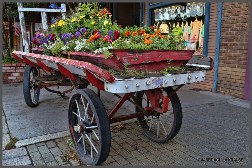 Photo in Street Photography #wagon #flower bed #flowers #truckee #california