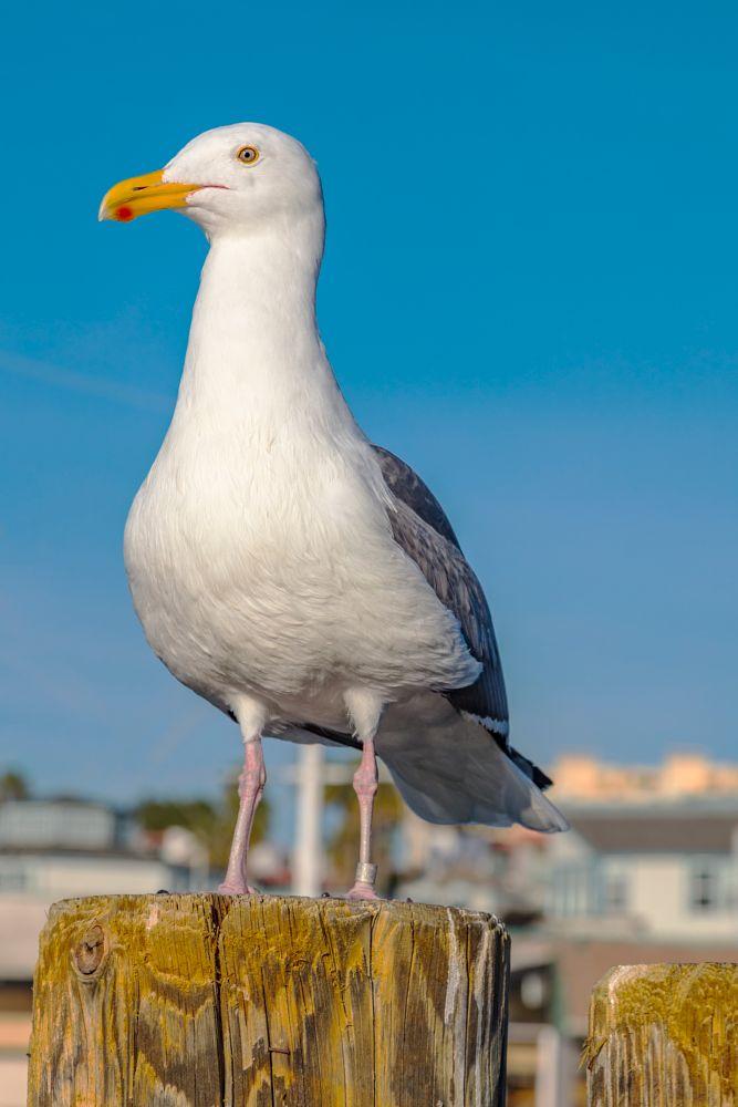 Photo in Animal #bird #seagull
