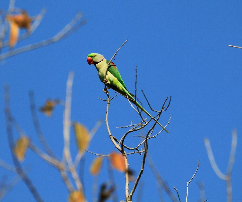 Photo in Animal #birds #animal #wildlife #nature #india #forest
