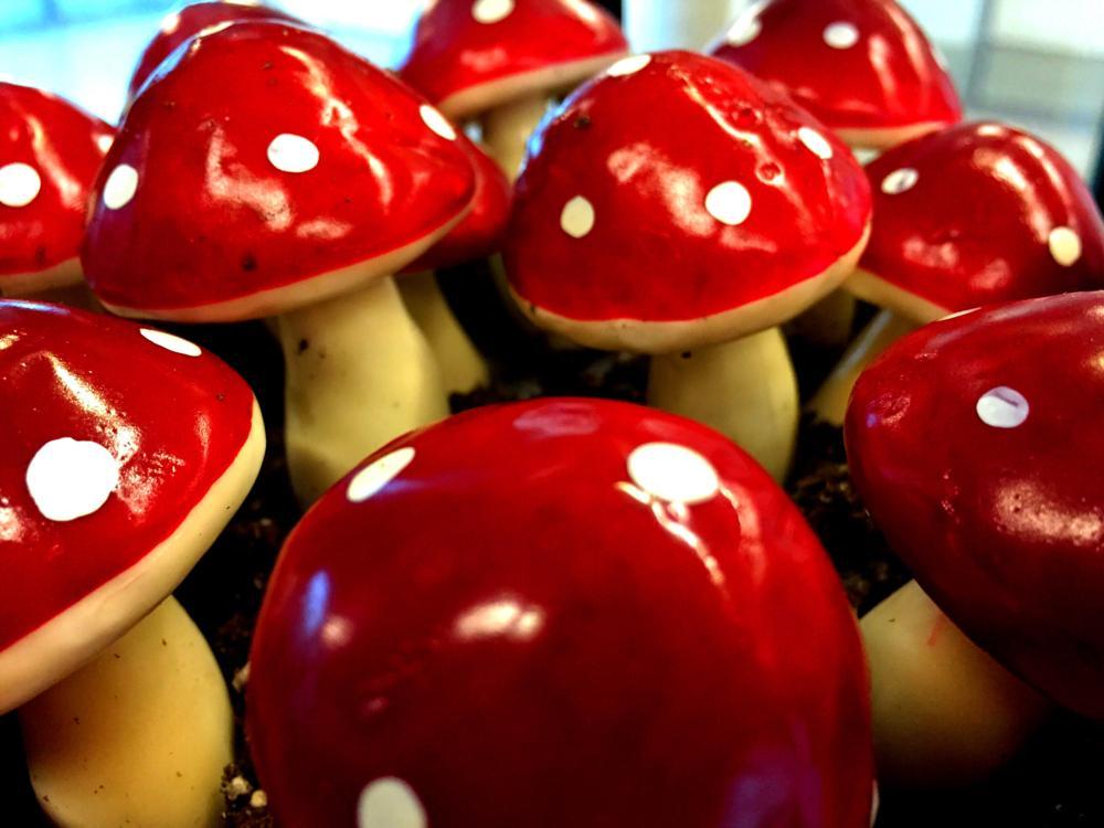 Photo in Nature #mushrooms #closeup #super mario bros