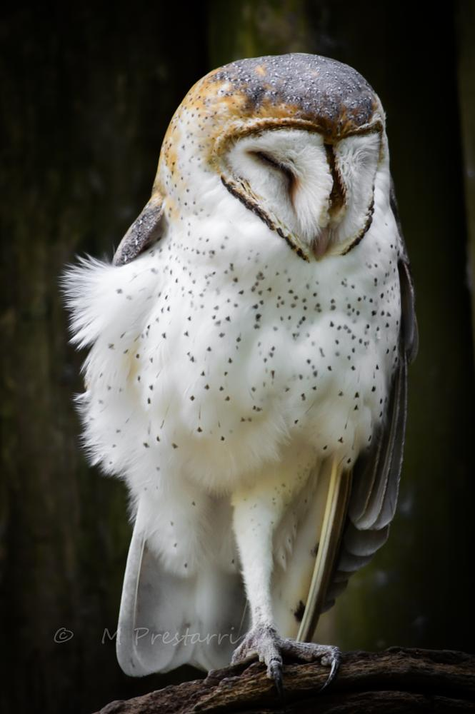 Photo in Animal #owl #nature #wildlife