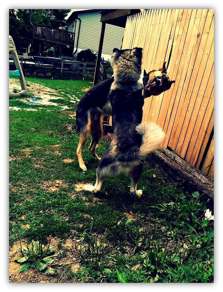 Photo in Animal #dogs #playful #fight
