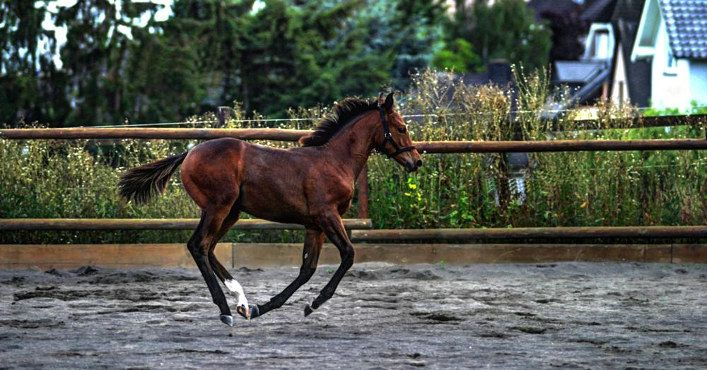 Photo in Animal #foal #galopp #color #outdoor #jan degen