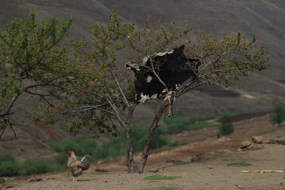 Photo in Travel #landscape #chicken #three #lesotho #africa